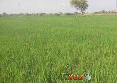 15 to 50 kanal agricultural land for sale
